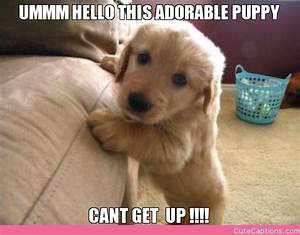 Cute Dog Pictures With Love Captions