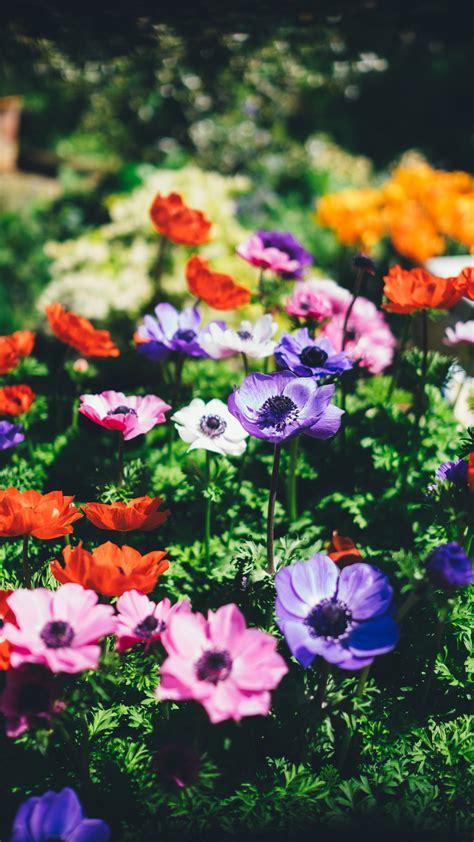 botanical spring daytime iphone wallpaper idrop news