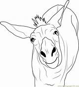 Donkey Coloring Printable Template Coloringpages101 Donkeys Pdf sketch template