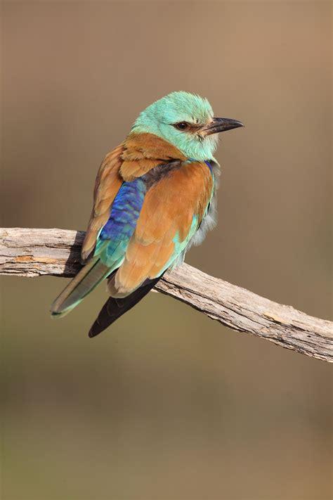 Birds of Central Spain - Ron - Spain Adventures
