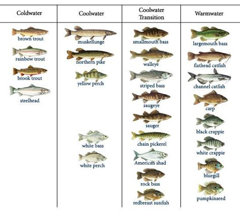 selecting   species kasco marine