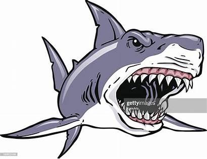 Shark Vector Charge Cartoons Illustration Illustrations Sharks