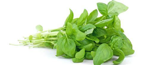 Makanan Sehat Makanan Sehat Untuk Ibu Hamil Makanan Bayam Makanan Sehat Bagi Otak Dokter Sehat