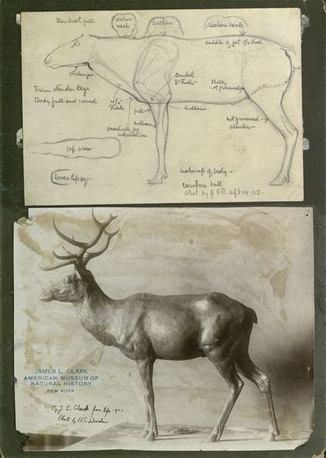 images  taxidermy collecting  pinterest