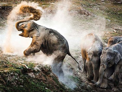 award winning wildlife photographs   year