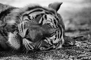 Schwarz Weiß Bilder Tiere : tiere in schwarz wei georg ivan photography ~ Markanthonyermac.com Haus und Dekorationen