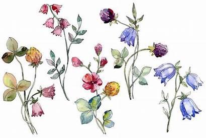 Watercolor Wildflowers Graphic Illustrations Mystocks Graphics Designer