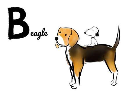 Beagle, Dogs, Beagle Dog