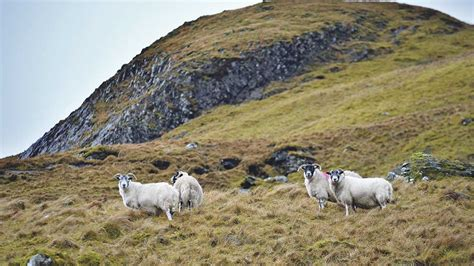 ambitions  build  brighter future  hill farming