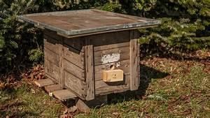 Insektenhotel Selber Bauen Anleitung : anleitung einen hummelkasten selbst bauen ratgeber garten ~ Michelbontemps.com Haus und Dekorationen