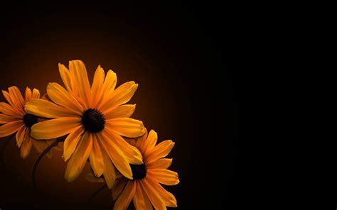 orange flower wallpaper background desktop wallpapersafari