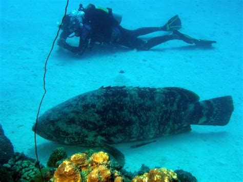 eels groupers times end together working