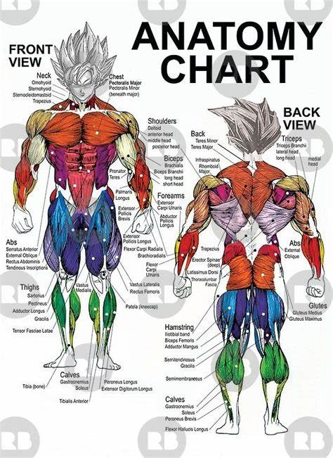 The names of torso muscles provide clues to their location, shape, size, or the direction of their muscle fibers. Pin on Exercise