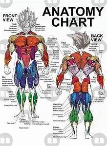 weight exercise chart pin on exercise
