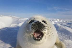 end canadian seal hunt shop for your cause