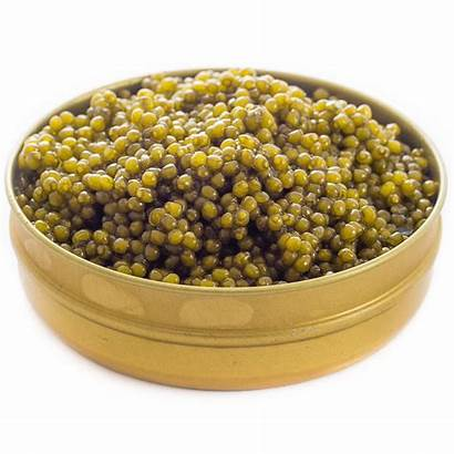Caviar Osetra Gold Imperial Golden Imported