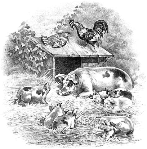 pigs piglets rooster  hen farm animals  graphic