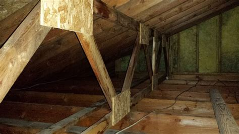 attic mold   remove  moldman
