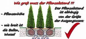 Thuja Smaragd Pflanzabstand : thuja pflanzen abstand thuja hecke pflanzen abstand ~ Michelbontemps.com Haus und Dekorationen