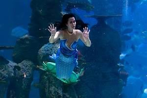 File Mermaid Performance  Jakarta Aquarium  Neo Soho