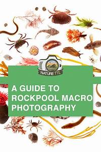 A Guide To Rockpool Macro Photography