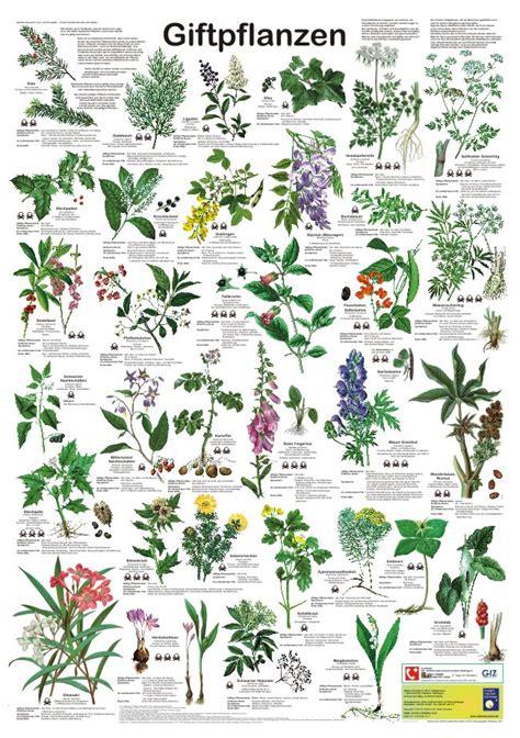 Botanischer Garten München Giftpflanzen by Poster Quot Giftpflanzen Quot Planet Poster Editions