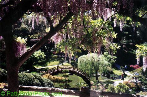 huntington botanical gardens photos of california huntington gardens san bernadino mountains windmills dana point