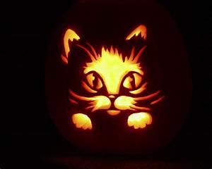 cute pumpkin | Halloween Costumes | Pinterest