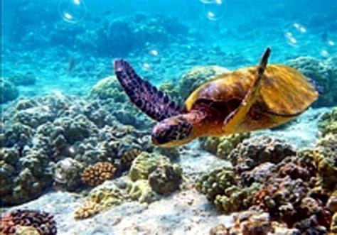 ecran de veille aquarium 3d gratuit t 233 l 233 charger nfsturtle2