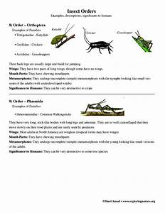 Mla Format Test Multiple Choice Insect Orders Grade 7