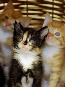 Eine Junge Katze Zieht Ein