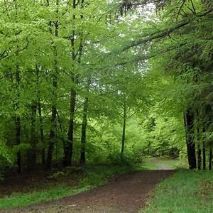Wirkung Der Farbe Grün : farbe gr n farbe der hoffnung du bist innen und au en ~ Markanthonyermac.com Haus und Dekorationen