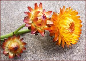 Thanksgiving Desktop Flowers