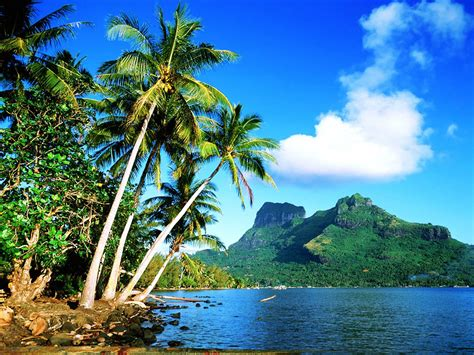 Wallpapers Coconut Tree Wallpapers