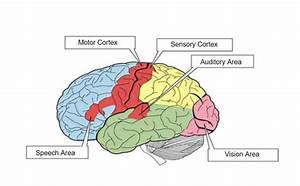 Sensory Memory: The Motor Behind Your Hidden Abilities ...