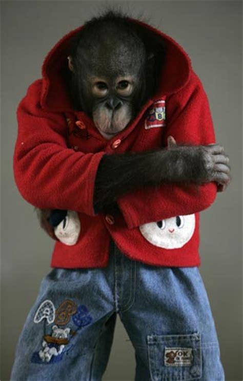 training baby orangutan  nanning  apple travel