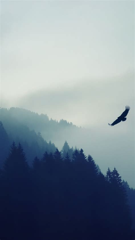 Wallpaper forest 5k 4k wallpaper fog eagle landscape