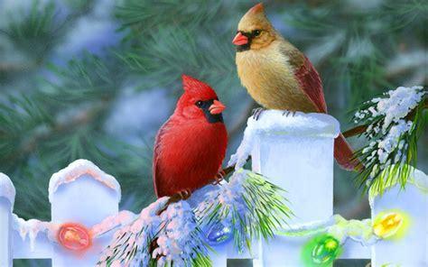 wallpapers  screensavers birds wallpapersafari