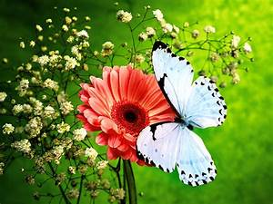 Colors Of Nature Hd Butterfly Wallpapers