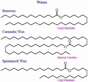 Lipids - Organic Chem 354 - Dr  Sundin