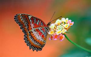 Butterfly and flowers wallpaper | Wallpaper Wide HD