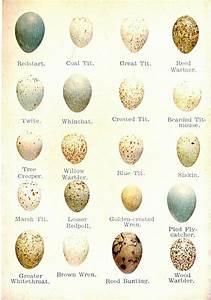 Bird U0026 39 S Eggs