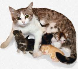 cat birth the stages of feline labor when your cat gives birth
