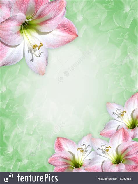 amaryllis pink flowers border illustration