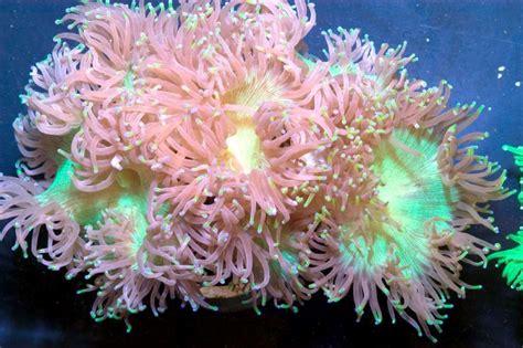 coral reefs ocean treasures memorial library
