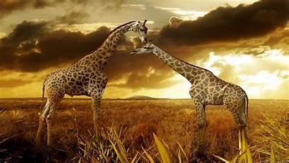 Nature Wallpapers Backgrounds Animals Widescreen 1080p Desktop