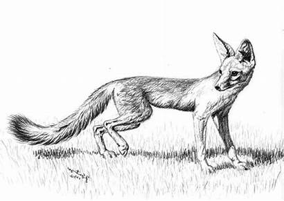 Fox Coloring Pages Sketch Kit Nimbus