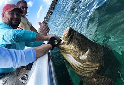 grouper fishing catch theonlinefisherman rod