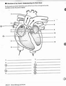 Heart Diagrams Unlabeled
