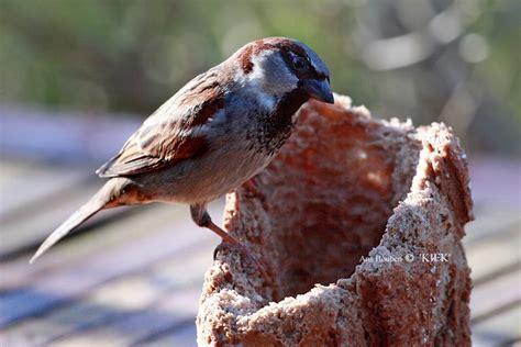 bird with bread feeding the birds pinterest